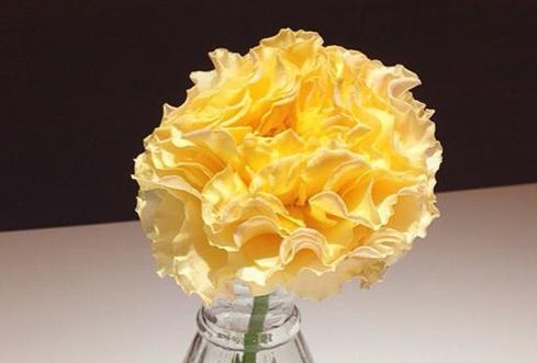 康帕内拉桃色/Campanella Peach月季花品种介绍及图片